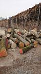 Brennholz vor der Verarbeitung