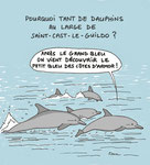 Les Dauphins aiment aussi Le Petit Bleu !