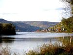 PA260020   Am Rhein bei  Lorch