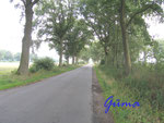 P8210001 Wunderschöne Allen - hier zwischen Mönkloh und Hingsheide 2