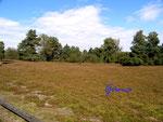 P9190003 Am Loensgrab bei Honerdingen_Walsrode in der Lueneburger Heide 3