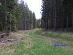 """P5130717 Im Thüringer Wald - Waldweg auf der """"Hohe Warte"""""""