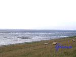 P8260005 Blick auf das Wattenmeer bei Trendermarschkoog - Badestelle