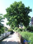 P5241375  Hornburg  Spaziergang Fußweg  -Im Teich- Bild 3
