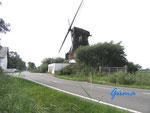 P82340011 Windmühle bei 25875 Osterende-Oldenswort /Schleswig-Holstein