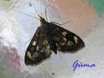 5-51-P6020002 Kleiner Schmetterling 2.jpg