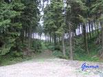 P7290671 Waldweg am Abzweig zwischen Kamschlaken und Damhaus