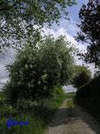 P5120344 Feldweg-Idylle