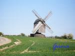 P4130304 Windmühle bei Liebenburg 2. Diese Windmühle ist leider im Mai 2012, kurz vor dem Mühlentag am Pfingstmontag einem Brandanschlag zum Opfer gefallen.