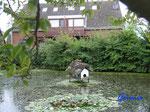 P9030843    idyllischer Dorf-Teich auf Fehmarn