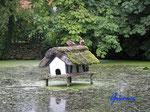 P9030842 idyllischer Dorf-Teich auf Fehmarn