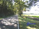 P9190012   Zwischen Meinern und Riepe südwestlich von Soltau