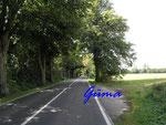 P8201127 Allee auf Rügen zwischen Glewitz und Garz