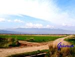 P4250314 Rhodop-Thrakien Gebirge in Bulgarien - Blick auf den Witosch - 2300 m hoch - südlich von Sofia