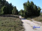 P9050878 Wanderweg  in der Wacholderheide zwischen Ellerbeck und Brockhöfe