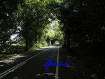 P8201128 Allee auf Rügen zwischen Glewitz und Garz