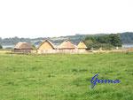 P8240019 Wikingerhäuser von Haithabu 3 bei Schleswig. Als Museumshäuser errichtet, um zu zeigen, wie früher die Wikinger gelebt haben.