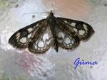 P6020001 Kleiner Schmetterling