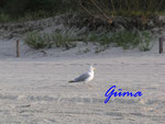 P8201104 Möwe am Strand