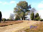 9190005a   Am Loensgrab bei Honerdingen/Walsrodel in der Lüneburger Heide - Loens-Gedenkstein