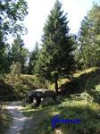 P9021250 Grab C der Sieben Steinhäuser auf dem Truppenübungsplatz Bergen - Osterheide