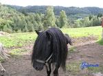 P8230776 Pferd auf der Koppel  in der Nähe  unserer Hütte in Bjaerum/Norwegen/Vestagder