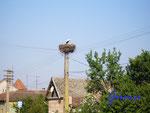 P4250320 Storchennest in Nádlac/Jugoslawien