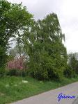 P5120340 das ist Frühling