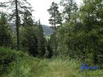 P8210744  in den Bergen über  unserer Hütte in Bjaerum/Norwegen/Vestagder