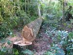 Wer genug gute Bäume auf seinem Grundstück hat, spart den Kauf vieler Bäume.