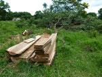 Aus den gefällten Bäumen wird sofort das benötigte Holz nach Maß mit der Motorsäge gesägt.