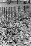 Hyde Park - Londres - 1981