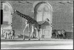 Zoo - London 1981