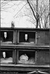 Zoo - Londres - 1981