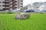 辻井廃寺の礎石