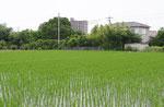 長坂寺跡付近