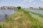 池の中の道路痕跡(東から)