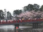 April 2, 2015 at Odawara Castle, Kanagawa, Japan