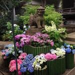 June 6, 2015 at Hakusan Shrine, Bunkyo, Tokyo (Ajisai Festival)