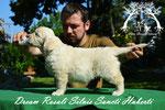 Dream Rosali SSH 6w