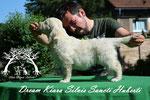 Dream Kiara SSH 6w