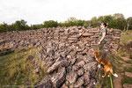 Die Ruine von Ismantorps borg ist frei zugänglich.