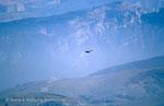 Adler über dem Monte Baldo © Rosenwirth