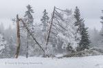 Winter am Rechelkopf © Rosenwirth