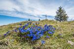Frühling am Farrenpoint © Rosenwirth