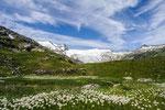 Wollgrastümpel am Schlattenkees gegen Großvenediger © Rosenwirth