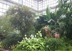 Im Gewächshaus des Botanischen Volksparks