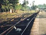 Tiere auf den Schienen