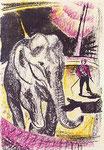 Elefante addomesticato