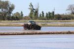 Delta de l'Ebre : fin avril, la mise en eau de la rizière et le travail du tracteur